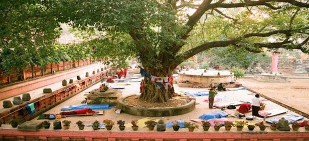 Где находится буддийская святыня – дерево Махабодхи